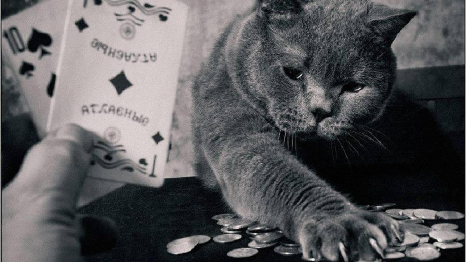 Unduh game poker di Android dan Cara Permainan Mudah Kemenangan